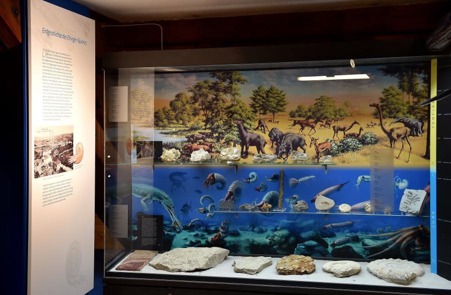 Geopark Infostelle Ehingen - Museum Ehingen